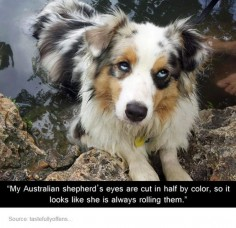 This is awesome and adorable! I so want my dog to have eyes like this!