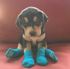 THIS TINY PUPPY IN TINY SOCKS.