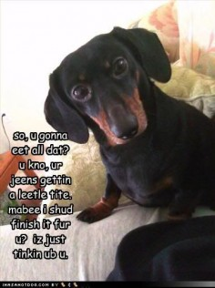 Thoughtful Doxie