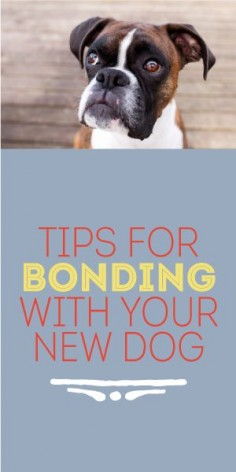 Tips For Bonding With Your New Dog!