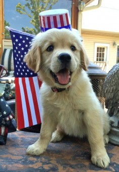 Tips for keeping your patriotic pets safe this 4th of July!