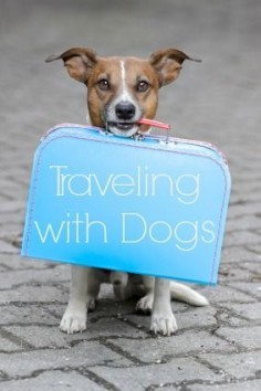 Tips for Traveling with Dogs #DogTravel #doglover #tips