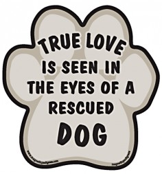 True love is seen in the eyes of a rescued dog.