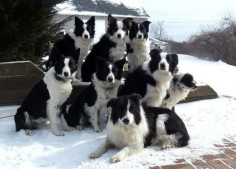 USA Olympic Herding Team Champions ;) lol!