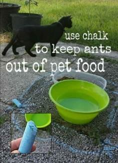 Utilice tiza alrededor de cuencos del animal doméstico al aire libre para mantener las hormigas fuera.
