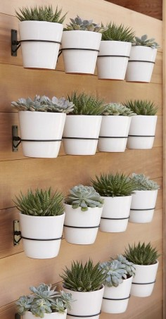 Wall planter hooks from Crate Barrel