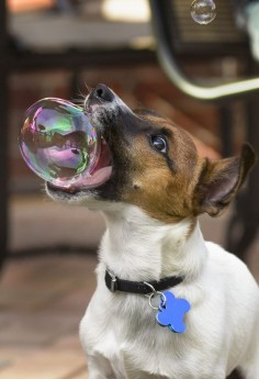 Watch these 22 So Cute Photos of Baby Animals Playing With Bubbles and making fun.