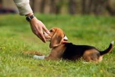 We always want to make sure our dogs are as happy and healthy as they could be, but we sometimes get stuck thinking we're doing everything we can do. There are always new ways to spice up your dog's …