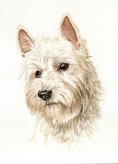 West highland terrier dog painting