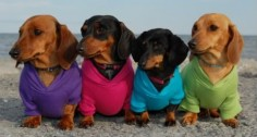 Wiener Rainbow