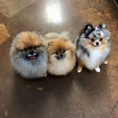 Wookie, Luni and Sprout