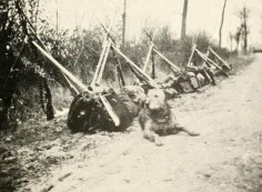 WWI Airedale Terrier guarding the supplies