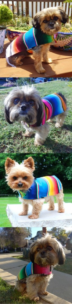 "Yorkie's love Baja Dog Ponchos! Use code ""BAJA20"" and save 20% off your poncho! *Proceeds donated to Baja Spay and Neuter Foundation."