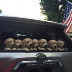 You should be happy because puppies.   27 Excellent Reasons To Be Happy