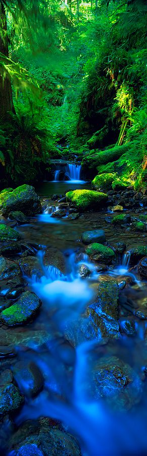 ♥ Olympic National Park, Washington, USA