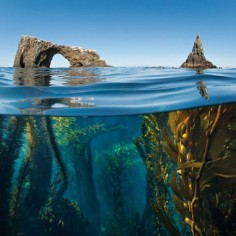 Anacapa Arch, Channel Islands National Park, California Photo by Antonio Busiello