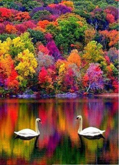 Autumn in New Hampshire, USA Colors are Wow!