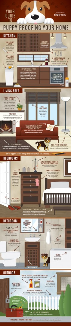 A list of everything you need to cover and move to make your home puppy-proof