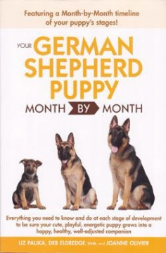 german shepherd border collie mix