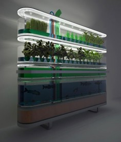 """Biosphere home farming concept generates food and cooking gas, while filtering water. The concept supplements a families nutritional needs by generating several hundred calories a day in the form of fish, root vegetables, grasses, plants and algae. Unlike conventional hydroponic nurseries this system incorporates a methane digester than produces heat and gas to power lights, similarly algae produces hydrogen and the root plants produces oxygen, which is fed back to"