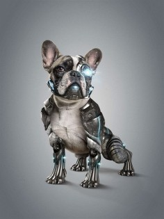 Cyber Dog l StudioNuts by Thiago Storino, via Behance