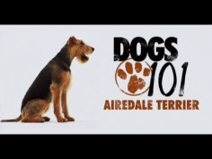 DOGS 101 - Airedale Terrier [ENG]