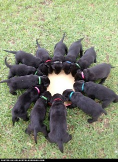 It's a Black Lab wreath!