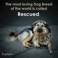 That's because the adopter wants a rescued dog and has so much love and reassurance to give. #largestdogs #largedogs #bigdogs #animals #dogs