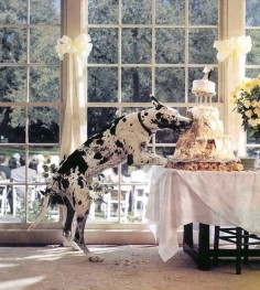 This is why my one day Great Dane, will NOT be at my one day wedding :)