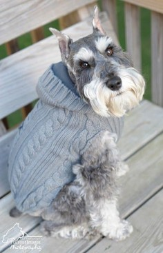 This Miniature Schnauzer looks just like one I had several years ago - loved her and miss her.