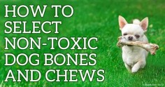 Safe To Give Dogs Deer Bones