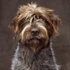 Wirehaired Pointing Griffon - natgeo's photo on Instagram