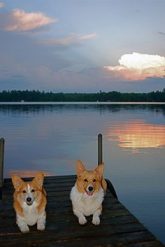 Wish you were here! | Ian & Mac(intosh), two Pembroke Welsh Corgi, via Flickr - Photo Sharing! © wplynn